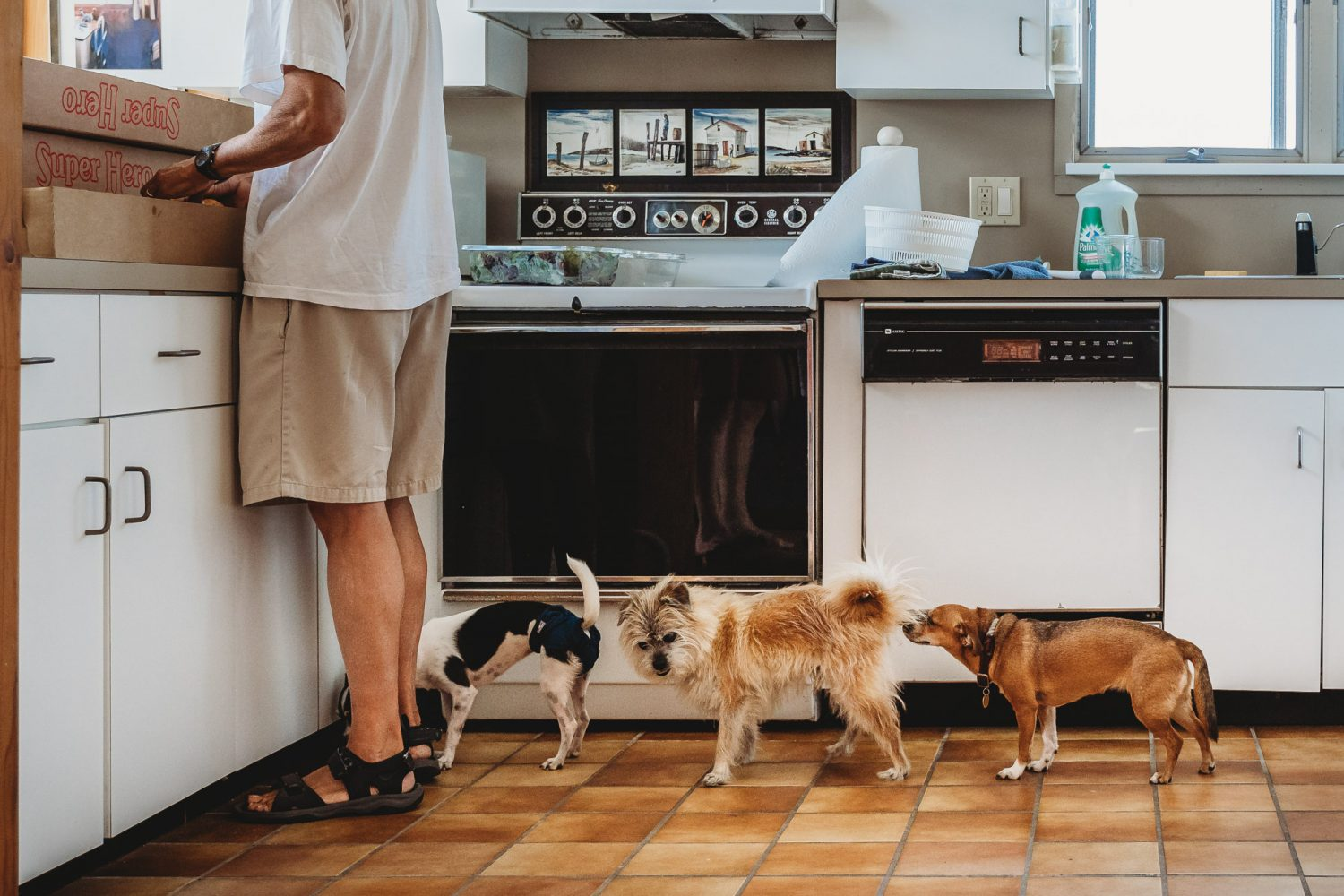 Documentary family photography: Three dogs sniff each others' butts. Fire Island, NY.